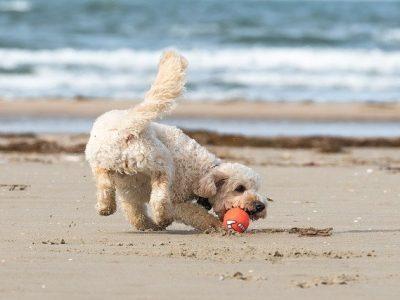 Urlaub Nordsee Hund, Ferienhaus, Eiderstedt